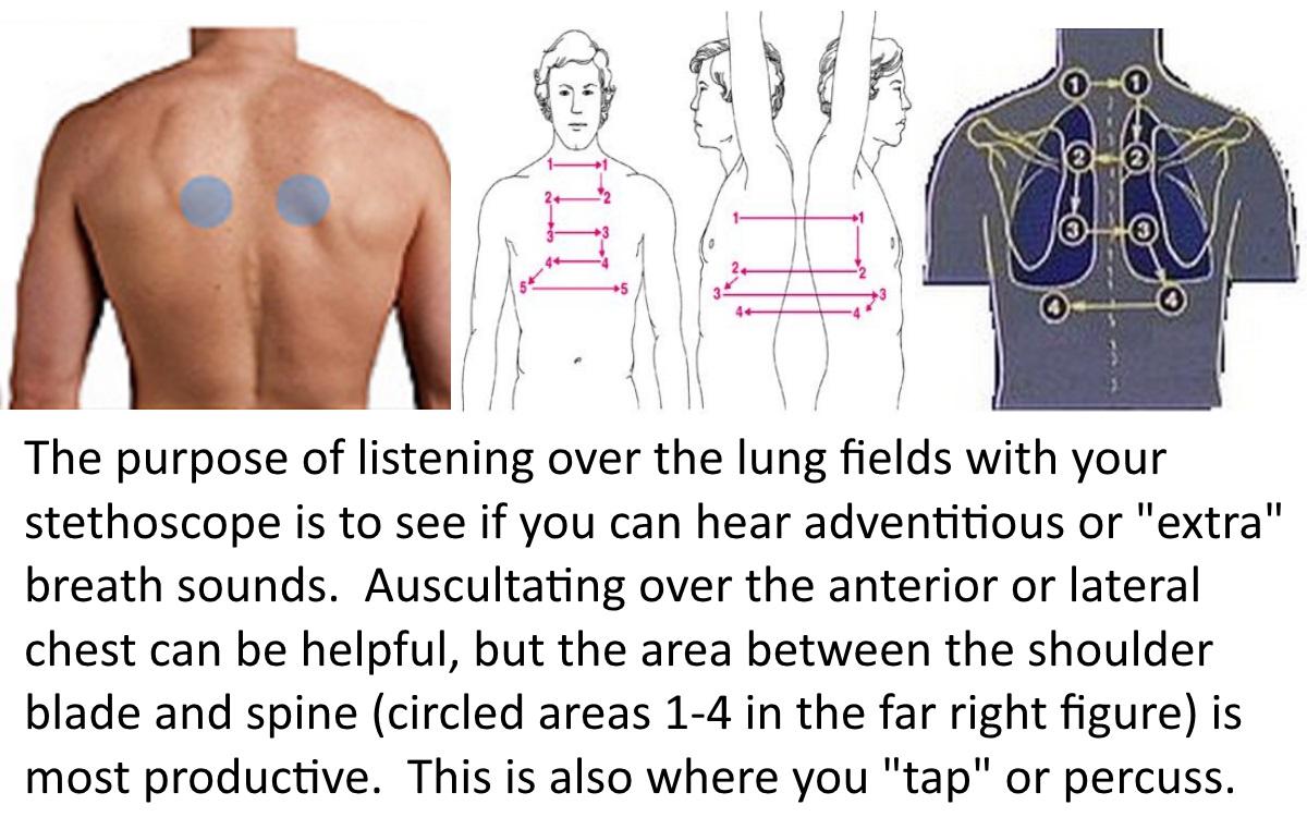 lung exam